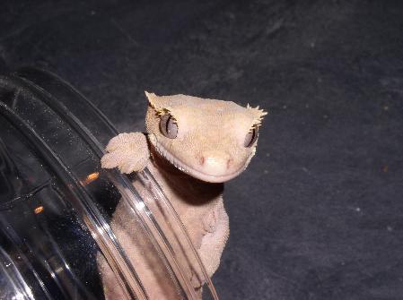 Sticky Lizards News Events